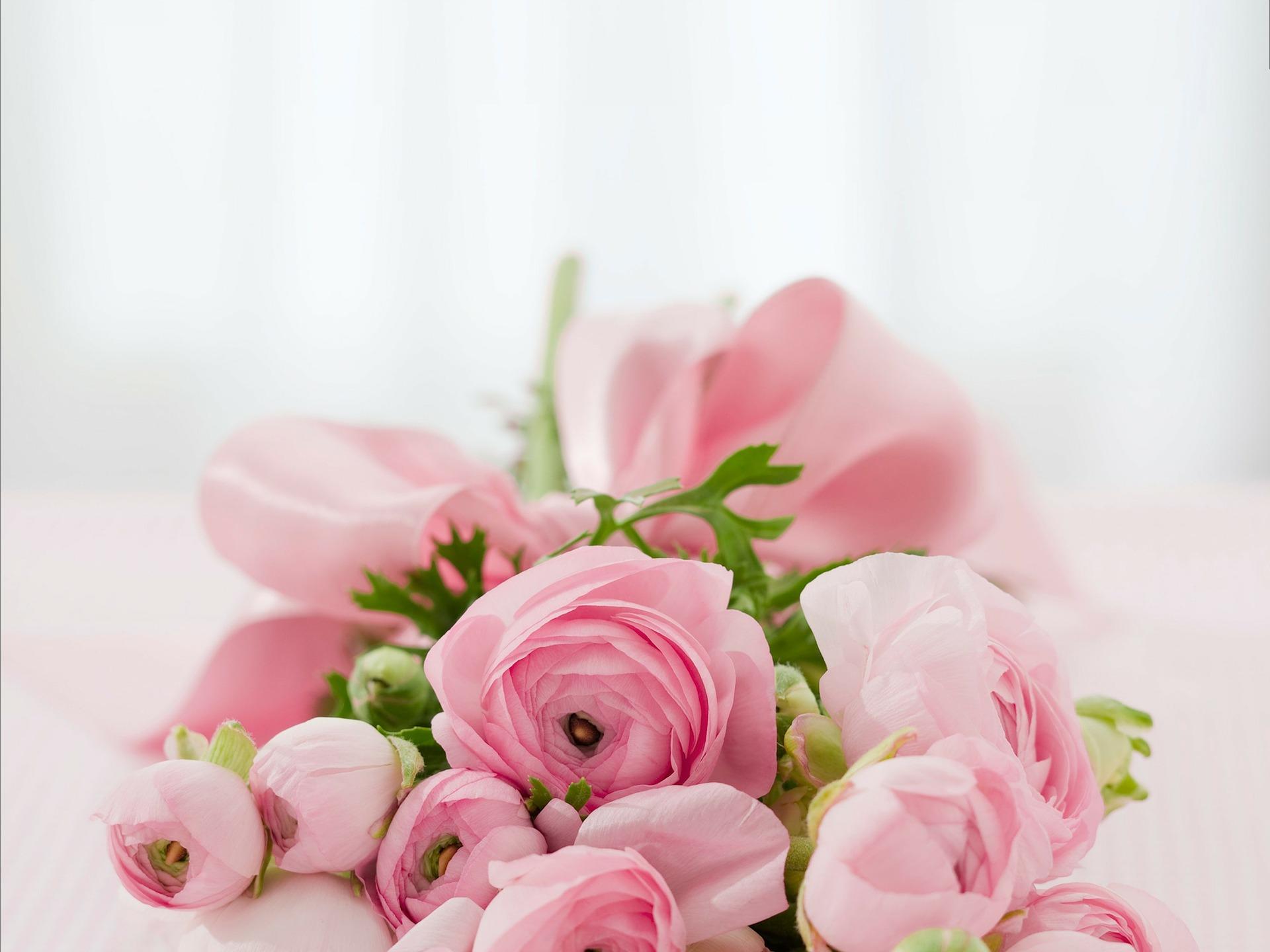 roses-142876_1920.jpg
